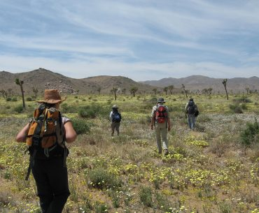 Hiking in Lost Horse Valley, Joshua Tree